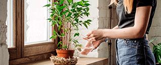 Mujer regando plantas de interiores