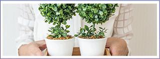 Regar las plantas de interiores