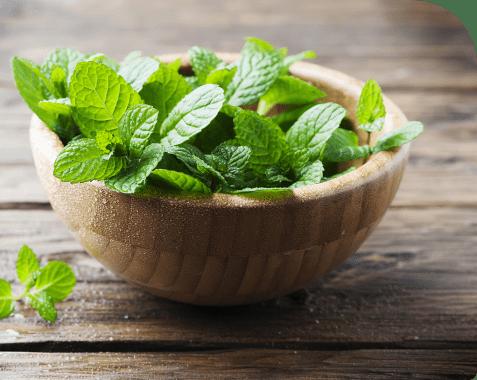 ¿Cómo cultivar culantro en casa?