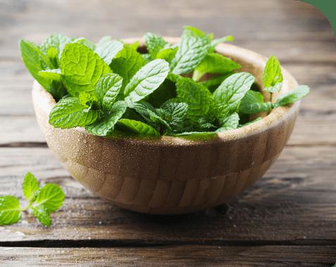 Remedios caseros contra los ácaros